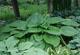 miniature OSIRIS Geant Vert