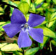 miniature Vinca Illumination