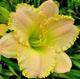 miniature Fragrant Bouquet