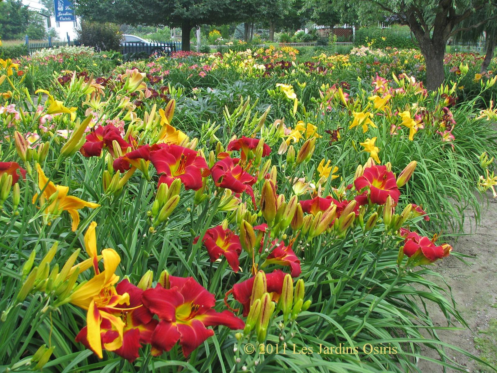 Les jardins osiris jardin de d monstration for Les compagnons des jardins